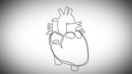 Human Heart structure animation illustration
