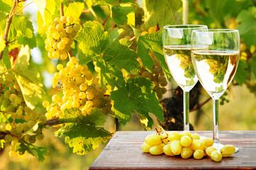 Weinreben und Weißwein