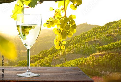 Leinwandbild Motiv Weinglas bei Sonnenuntergang im Weinberg