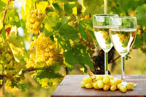 Leinwandbild Motiv Weinreben und Weißwein