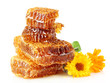 sweet honeycomb with honey, bee and flowers, isolated on white
