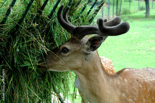 Fed deer in Zoo
