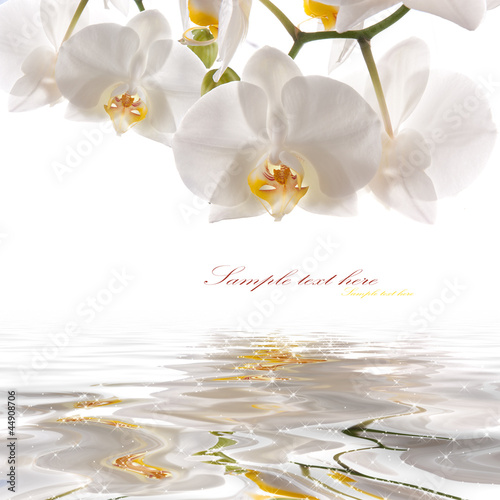 white orchids on the water