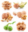 Collection of Walnut and a Kernel isolated on white background,