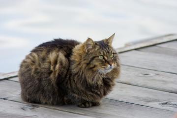 Splendido gatto peloso sul molo