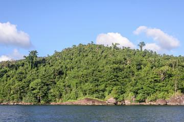 Masoala forest