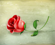 Rose, old-style