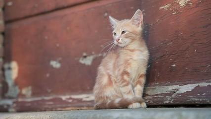 Katze beim gähnen