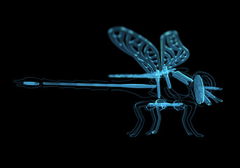 Dragonfly (3D xray blue transparent)