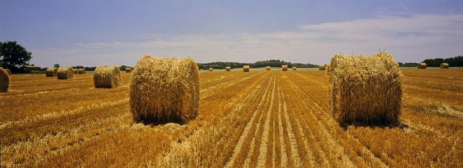 Paille de blé ronde