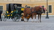 Carriage with horses for hire in Vienna