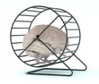human brain with arms and legs in hamster wheel