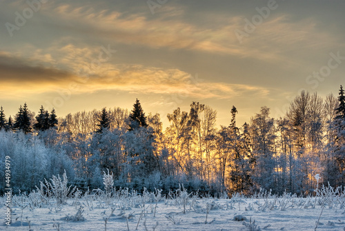 winter sunset glowing through frosty treeline