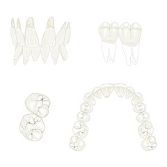 artificial teeth