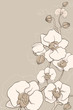 the white decorative orchids on grey background