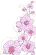 the pink decorative orchids on white background