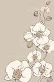 Fototapety the white decorative orchids on grey background