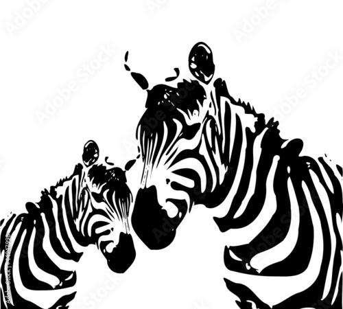 Fototapeten,zebra,pelz,kunst,tierpark