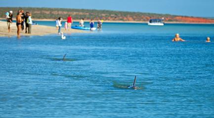 Spiaggia a Monkey Mia, Monkey Mia beach, We Australia