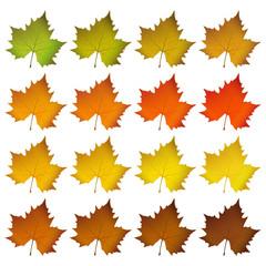 Herbst, Blätter, Laub, Ahorn, Ahornblätter, Leafs, Herbst, Farbe