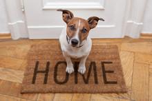 """Постер, картина, фотообои """"dog welcome home entrance"""""""
