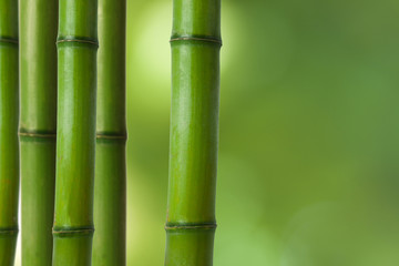 troncos de bambú
