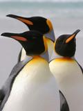 Fototapete Insel - Antarktis - Vögel