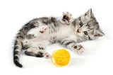 kitten playing with yellow clew