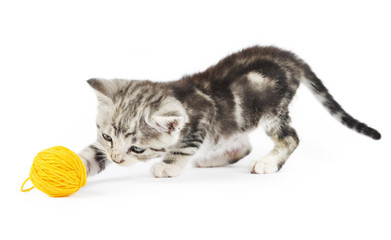 kitten playing