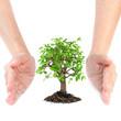 Hands around small tree