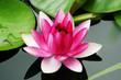 Leinwanddruck Bild - fleur de nénuphar