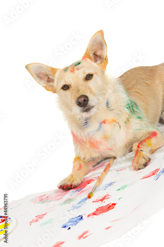 Happy alert dog artist
