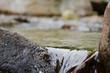Acque sorgive di montagna - 44968917