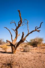 Death tree in Joshua Tree National Park
