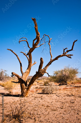 Death tree in Joshua Tree National Park