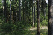 canvas print picture - Naturbelassener Wald