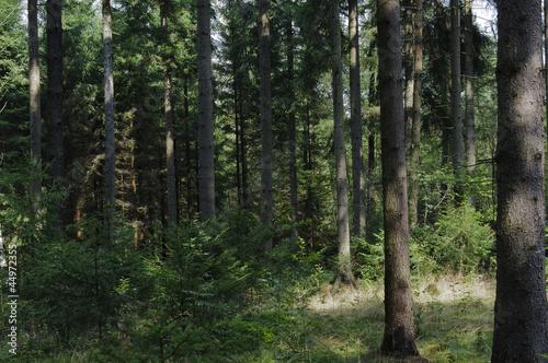 canvas print picture Naturbelassener Wald