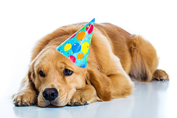 Sad Dog at a birthday party