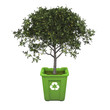 Fruit tree in recycle bin