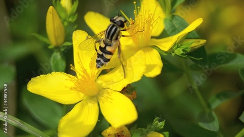 Bee on a yellow flower in the fall
