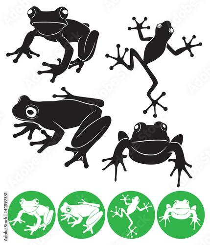 frog - 44992331