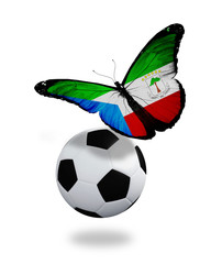 Concept - butterfly with Equatorial Guinea flag flying near the