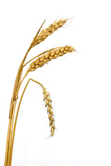 Wheat Ear / Spike with one bent / symbol of passing away