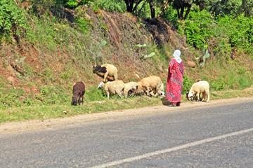 Woman shepherd herding sheeps