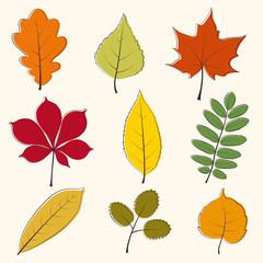 Autumn leaves icon