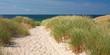Weg zum Strand durch Dünen bei Kampen auf Sylt an der Nordsee