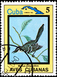 Mimus Polyglottos, from Series Cuban Birds