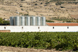 Vineyards and winery factory