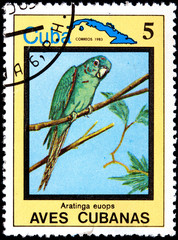Aratinga Euops, from Series Cuban Birds