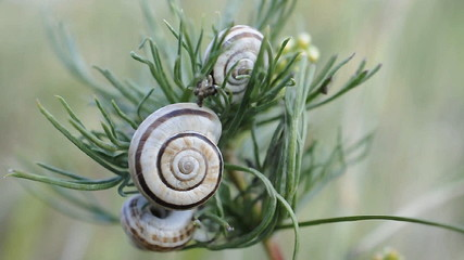 Three snails on plant branch